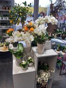 Cvetličarna Omers - orhideje5