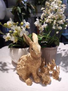 Cvetličarna Omers - zajec