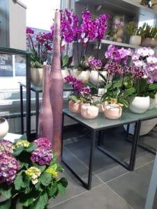 Cvetličarna Omers - orhideje vijola1