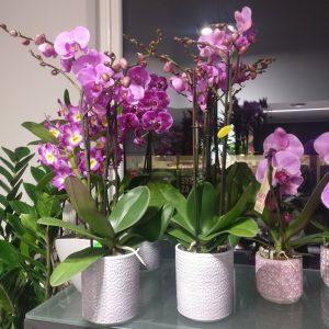 Cvetličarna Omers - orhideje2