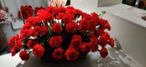 Cvetličarna Omers - rdeči nageljni