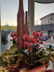 Cvetličarna Omers - izložba