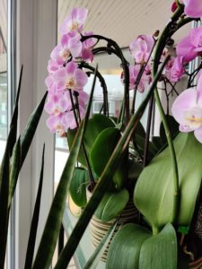 Cvetličarna Omers - OR